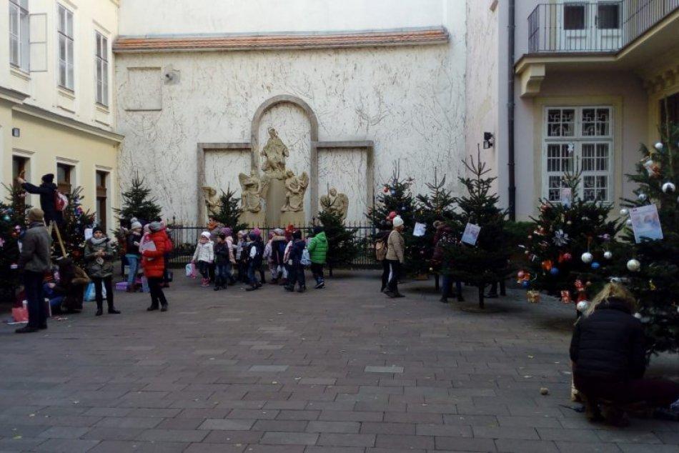 b1d11d648c5f Ilustračný obrázok k článku FOTO  V centre Bratislavy vyrástol Vianočný les  plný voňavých stromčekov